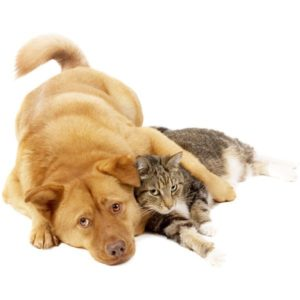 Oohlalapets.com about: cat and doggy together