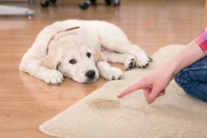 Best Pet Stain and Odor Removers in 2021