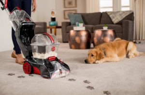 Best carpet cleaners: owner cleaning the carpet with his dog