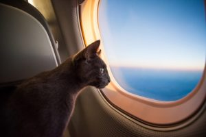 Traveling with your pet on a plane: useful tips