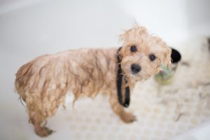 Best Wet and Dry Dog Shampoo