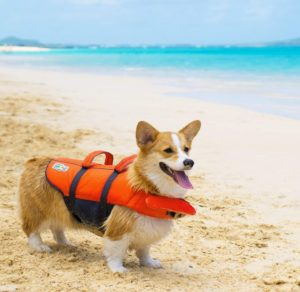 Dog Life Jackets Reviews 2020