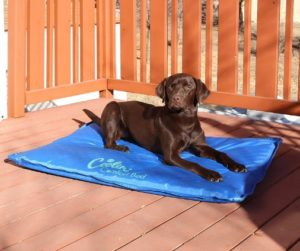 Best Dog Cooling Pads and Mats 2021 Reviews