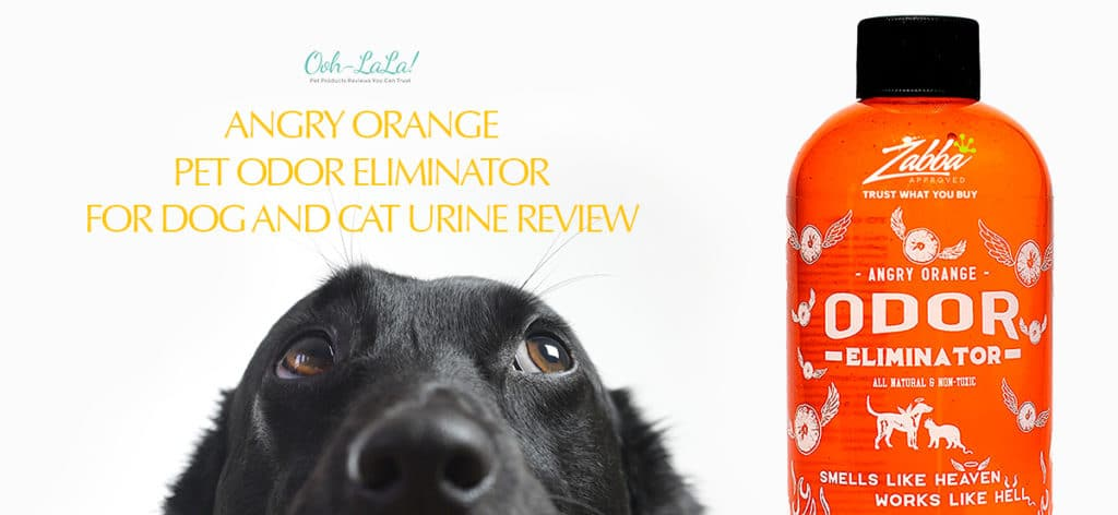 Angry Orange Pet Odor Eliminator for Dog and Cat Urine Review