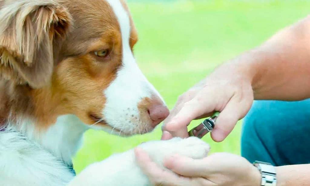 Safari Guillotine Pet Nail Trimmer Review