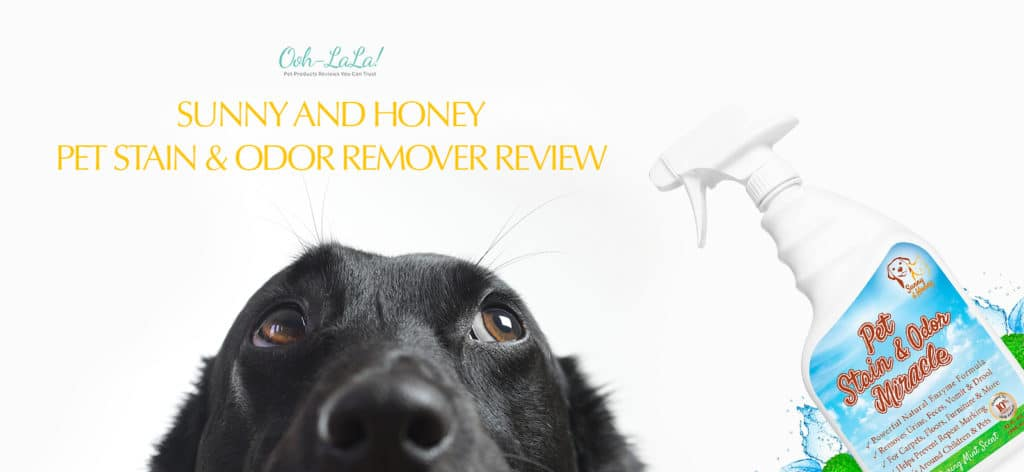 Sunny and Honey Pet Stain & Odor Remover Review – Best Enzyme Cleaner Overall