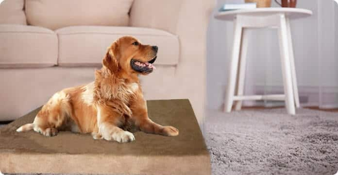 Dogbed4less Memory Foam Dog Bed Review in 2020